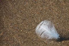 Pos eso, una pluma (donseveriano) Tags: beach huelva playa andalucia panasonic pluma puntadelmoral fz28