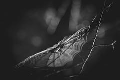 Toile (Mathieu Noel) Tags: spider araigne toile toiledaraigne consolationmaisonnette
