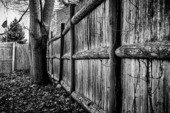 "matching black (Isaiah62:1) Tags: trees monochrome leaves fence blackwhite nikon usflag 30faves treepics nikkor35mm d5200 ""nikonflickraward"" fencefriday newenglandamateurphotos norulesnolimitspics"