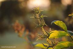 1407 LM2 (70)Ms (francperet) Tags: light sunset summer france nature nikon cine nikkor v1 franc peret nikon1