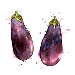 Plump Aubergine (Eggplant) (Amy Holliday) Tags: food art vegetables fruit illustration watercolor painting botanical juicy vivid lifestyle fresh ingredients watercolour organic foodart appetizing foodillustration