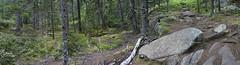 DC3275  DSC05764NX5Na  Wooded Trail  © 2014 Paul Light (Paul Light) Tags: landscape woods rocks path southwestharbor acadianationalpark flyingmountain reallyrightstuffpanokit