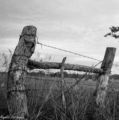 Texas Fence (magnetic_red) Tags: blackandwhite field fence wooden texas rodinal barbwire fp4 semistand