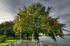 Kralingse Bos - Rotterdam (Frans & all) Tags: park city tree rotterdam boom kralingen kralingsebos allfrans sonya7samyang14mmf28