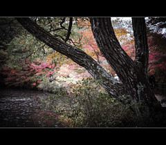 (gol-G) Tags: color japan digital 35mm bokeh sony kobe botanicalgarden a7 nokton f12 alpha7  voigtlandernokton35mmf12aspherical selectiveconceptualdof vmadapter ilce7