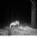 Wildlife in the Compost - 4:20 AM - November 13, 2014