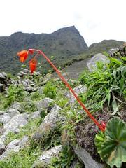 Machu Picchu-164