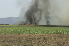 Sugar Cane Burning (S.Wray) Tags: africa trip travel holiday colour travelling field cane digital canon landscape southafrica fire photography 50mm farm harvest documentary sugar burn 600d