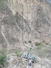 Colca Canyon-42
