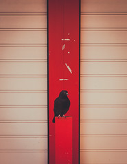 watch out (itawtitaw) Tags: light red white color bird strange lines silhouette contrast munich symmetry minimalist canoneos5dii canon2470mm28ii