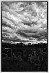 Brave this storm (Riccardo_29) Tags: bw storm clouds this nikon nuvole nuvola infinity fear emilia brave uva infinito bianco nero emiliaromagna tempesta romagna paura contorno filari d3100