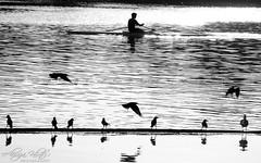 Untitled (Aliraza Khatri) Tags: blackandwhite art texture water birds photography flying away photographs sail notitle khatri aliraza alirazakhatri