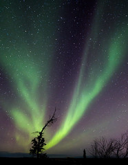 One From Many (davebrosha) Tags: art landscape lights artist stock nwt aurora northern auroraborealis yellowknife artistry veelake davebroshaphotography robbiecraig
