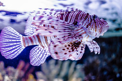 Fish - Oceanario Lisbona (antoniosimula) Tags: oceanario lisbon lisbona lisboa portogallo portugal area expo fish flora fauna nikon d3200 35mm 70300 tamaron ocean species pacific atlantic indian