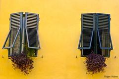 Italie du Nord 2016 - Lucca (philippebeenne) Tags: italie italia lucca lucques toscane fentres windows jaune mur faade volets