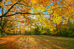 Autumn is Here (Fotografia y Cultura) Tags: autumm canon 5d sigma1735mm28exdghsm rockwood ontario handheld