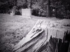 302/366 The Hebrew Cemetery (Bernie Anderson) Tags: ifttt 500px no person travel outdoors water landscape nature rock monochrome tree people wood park stone scenic river geology sky mountain light tourism cemetery grave