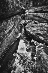Above Sullivan Falls, 2016.09.28 (Aaron Glenn Campbell) Tags: sgl13 stategamelands13 jamisoncity sullivancounty nepa pennsylvania nature outdoors clickandpaint bw blackandwhite tint toning textures hdr 2ev 3xp macphun aurorahdrpro sony a6000 a6k ilce6000 sonyalpha6000 mirrorless rokinon 12mmf2edasifncs wideangle primelens manualfocus emount
