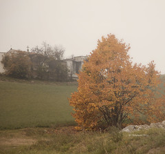 (IMAphotoArt) Tags: nebbia allaperto albero autunno