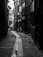 Porto - Portugal (Francisco (PortoPortugal)) Tags: 2242016 20161022fpbo4288 pb bw monocrome centrohistrico historicalcenter porto portugal ruadosmercadores street portografiaassociaofotogrficadoporto franciscooliveira
