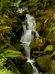 Tiny waterfall (Ramona H) Tags: waterfall laddercreek seattlecitylight newhalem northcascades skagitriver nature water
