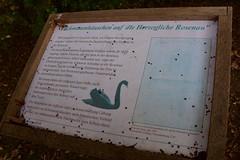 (:Linda:) Tags: germany bavaria franconia town coburg rosenau pond written castle rosenaupark bird blackswan