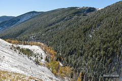 Highway 14 Canyon (kevin-palmer) Tags: bighornmountains bighornnationalforest wyoming dayton highway14 nikond750 tamron2470mmf28 fall autumn october snow snowfall snowy cold morning clear sunny foliage yellow gold golden pine trees canyon