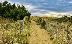 le dune del Forte ... (2) (miriam ulivi) Tags: miriamulivi nikond7200 italia toscana versilia areaprotetta oasiwwf dunedifortedeimarmi vegetazione viottolo staccionata sabbia nature path fence vegetation