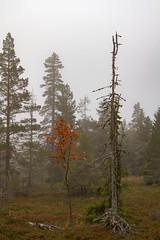 Blefjell (PeterSjoquist) Tags: blefjell norway climbing mountain fog dramatic magic