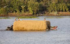 Do Haystacks Float? (TrekLightly) Tags: vietnam mekong river lindblad nationalgeographic jahan treklightly