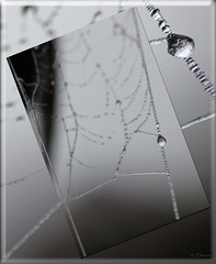 Eistropfen  /  icedroplet (Ellenore56) Tags: 26112016 eistropfen eis ice icedrop icedroplet gefroren eisig icy icily frosty freezing cold kald cool frost frozen iced tropfen drop drops tröpfchen droplet 1°c wassertropfen waterdrops natur nature nahtour spinnweben spinnfaden silk cobweb spiderweb www spider´sweb detail makro macro moment augenblick sichtweise perception perspektive perspective reflektion reflection reflexion farbe color colour licht light inspiration imagination faszination magic magical sonyslta77 ellenore56 wetter weather wasserperle waterpearl perle pearl effekt effect h2o beauty gefrorenewasserperle congeal frozenwaterpearl frozenwaterdroplet