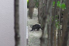 Today's Cat@2016-10-24 (masatsu) Tags: cat thebiggestgroupwithonlycats catspotting pentax mx1