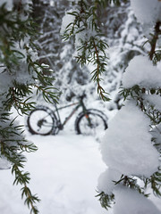 Snow Fatbiking 1 (pjen) Tags: forest nature fatbiking finland snow boreal nordic winter outdoor frost tree plant pine conifer serene pinetum landscape