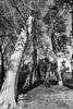 (RaulC1973) Tags: blackwhitephotos bw monochrome canon70d sigma1020mmf35exdchsm