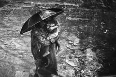 Monsoon Intimacy (N A Y E E M) Tags: salma nanny umar kalam son umbrella rain monsoon moment lawn frontyard afternoon balcony 1stfloor home rabiarahmanlane chittagong bangladesh lulu