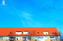 I  Ne e d  T h i s  R i g h t  N o w (Rzvan Oprea-Balai) Tags: autumn trees sky red city birds travel blue minimal freedom outdoor architecture roof beautiful fall pigeons simple calm fly facade relax minimalist minimalism nobody scenic traces less poland polska stettin szczecin