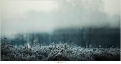 IJs en mist (nandOOnline) Tags: mist morning strabrecht koud sunrise december nature nevel landscape vorst zonsopkomst dauw natuur strabrechtseheide cold fog ochtend landschap frost heeze nbrabant nederland