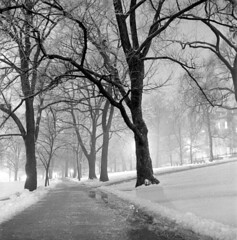 020459 08 (ndpa / s. lundeen, archivist) Tags: nick dewolf nickdewolf blackwhite photographbynickdewolf tlr bw 1959 1950s february winter boston massachusetts beaconhill night nighttime wintersnight park common bostoncommon tree branches snow snowy snowfall trees film 6x6 mediumformat monochrome blackandwhite light lights path pathway slush slushy