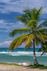 Chill out time (Jeremie Bohen) Tags: wave aguada puertorico ocean tree palm