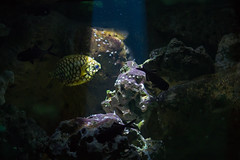Swim into the light! (Bas Witkop) Tags: light lights column ray rays fish fishtank swimming water canon shadow shadows artis netherlands holland