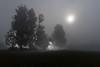 Secret light (marko.erman) Tags: light sun trees silhouette sony morning cerknica slovenia slovenija lake jezero mist misty mood moody landscape secret