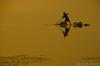 Homeward bound (sakthi vinodhini) Tags: kolavai lake fishing fishermen india tamil nadu chennai chengalpet south earlymorning early morning sunrise nikon d5100 cwc560 cwc outdoor shade silhouette