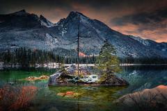 Survivors (Croosterpix) Tags: nature lake trees mountains alps hintersee nikond610 nikkor1835