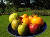starr-161113-5865-Diospyros_kaki-local_fall_fruit-Hawea_Pl_Olinda-Maui (Starr Environmental) Tags: diospyroskaki