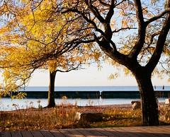 Trees at Budapest Park (stevemccaffrey) Tags: mamiya mediumformat kodak film kodakektar100 rz67 toronto ontario canada colours colour colourful fall autumn water lakeontario lake lakeshore rocks trees