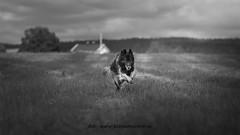 20160621095774 (koppomcolors) Tags: koppomcolors dog hund