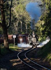 Dinner Train (Dobpics O'Brien) Tags: engine steam victorian victoria vr trestle billy bridge belgrave locomotive pbr puffingbilly puffing pbps dinner train rail railway railways 14a