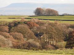 December days (Lancashire Lass ...... :) :) :)) Tags: trees woods pendlehill lancashire ribblevalley chipping mist fence drystonewall farm autumn winter december haze leagram