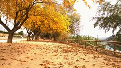 a new path to the happiness (esther gc) Tags: landscape autumn happiness paisaje otoo camino path