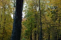 Rima Dadenji, reclining on green cushions and beautiful fine carpets, 2016 (Rima Dadenji) Tags: green nature environment trees forest woods permaculture agroforestry ecoforestry ecology landscape rimadadenji fuji fujifilm fujifilmxt10
